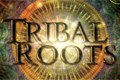 Tribal Roots aftermovie